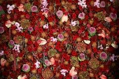 Belle texture naturelle de mur de fleur Images stock
