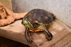 Belle tortue Photos stock