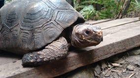 Belle tortue de terre dans le biopark photos libres de droits