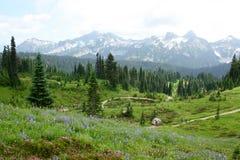 Belle traînée du mont Rainier avec les fleurs de floraison Photographie stock libre de droits