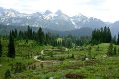Belle traînée du mont Rainier avec les fleurs de floraison Image stock