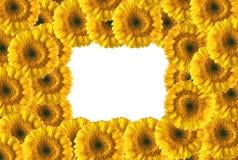 Belle trame jaune de gerberas photos stock