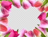 Belle Tulip Frame Vector Illustration réaliste rose Images stock