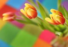 Belle tulipe de ressort sur un fond coloré Photo stock