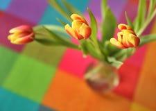Belle tulipe de ressort sur un fond coloré Images stock