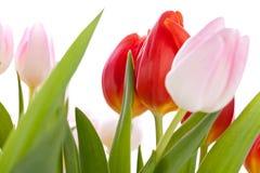 Belle uova del colorfull della decorazione dell'uovo di Pasqua Immagine Stock