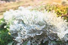 Belle usine de feuilles s'élevant en nature Image libre de droits