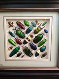 Belle variété de scarabées Photographie stock