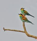 Belle verticale d'oiseaux Photographie stock libre de droits
