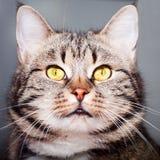 Belle verticale de chat. Photos libres de droits