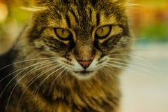 Belle verticale de chat Photos stock