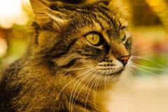 Belle verticale de chat Photos libres de droits