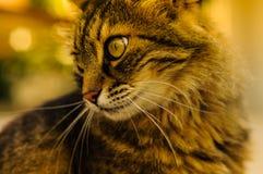 Belle verticale de chat Photo libre de droits