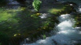 Belle vidéo de nature et de paysage avec le bruit du parc national Croatie de Krka banque de vidéos