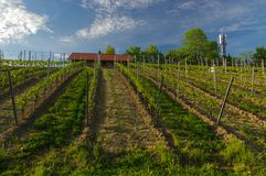 Belle vieille maison de vin entourée avec des collines de vignoble Gisements de raisin près de Wurtzbourg, Allemagne images libres de droits