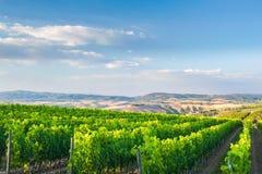 Belle vigne sulle colline della Toscana pacifica, Italia Fotografie Stock