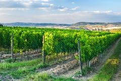 Belle vigne sulle colline della Toscana pacifica, Italia Immagini Stock Libere da Diritti