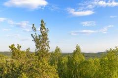 Belle viste della foresta sul cielo blu del fondo Immagine Stock