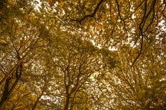 Belle voûte dans la réserve naturelle du bois antérieure, Crowhurst, le Sussex est, Angleterre photo stock