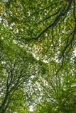 Belle voûte dans la réserve naturelle du bois antérieure, Crowhurst, le Sussex est, Angleterre photos stock