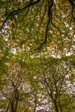 Belle voûte dans la réserve naturelle du bois antérieure, Crowhurst, le Sussex est, Angleterre images stock