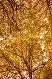 Belle voûte dans la réserve naturelle du bois antérieure, Crowhurst, le Sussex est, Angleterre photographie stock