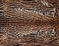 Belle vraie peau de fond de léopard Photos stock