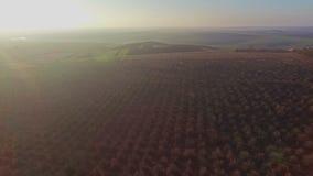 Belle vue aérienne de champ de pommiers clips vidéos
