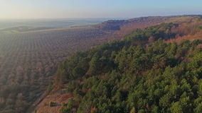 Belle vue aérienne de forêt et de jardin clips vidéos