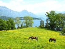 Belle vue au-dessus d'un lac suisse de turquoise avec les montagnes couvertes de neige, les yachts, les voiliers et deux chevaux  photographie stock libre de droits