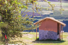 Belle vue au jardin et à la maison au jour ensoleillé Image stock