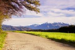 Belle vue aux montagnes de Rigi de la voie de forêt Images stock