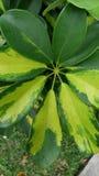 Belle vue croissante de nature de plante verte Image stock