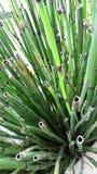 Belle vue croissante de nature de plante verte Photographie stock libre de droits