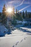 Belle vue d'hiver de forêt dans la montagne de Tatra Photo stock