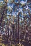 Belle vue dans la forêt d'automne modifiée la tonalité Image stock