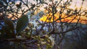 Belle vue de coucher du soleil Images libres de droits