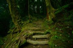 Belle vue de forêt verte mystérieuse Photo libre de droits