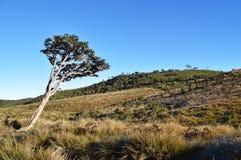Belle vue de l'île de la Ceylan Image stock