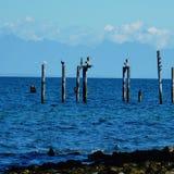 Belle vue de l'océan pacifique Images stock