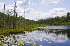 belle vue de lac photo stock