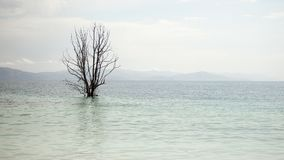 Belle vue de lac arménien Sevan et d'arbre isolé Photos libres de droits