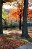 Belle vue de parc d'automne Photographie stock libre de droits
