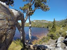 Belle vue de piscine de wombat image libre de droits