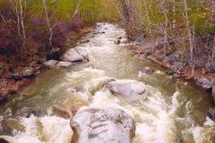 Belle vue de rivière de montagne en été, montagnes d'Altai, Russie Photo stock