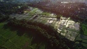 Belle vue de terrasses de riz ? partir de dessus pousse avec le bourdon un jour ensoleill? clips vidéos