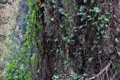 Belle vue des arbres enlacés avec de diverses usines photographie stock libre de droits