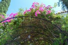 Belle vue des fleurs roses sous le paysage de lumière du soleil à l'été sur l'île d'Aegina Photo libre de droits