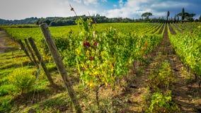 Belle vue des vignobles en Toscane photo stock