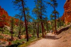 Belle vue extérieure de forêt Bryce Canyon National Park Utah de pin de pinyon images stock